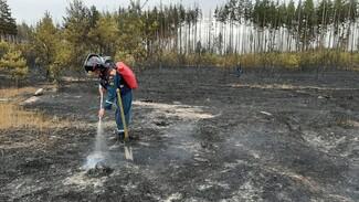 В Воронежской области локализовали один из трёх действующих природных пожаров