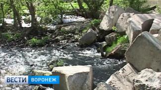На одной из рек Воронежской области донской рыбе перекрыли путь на нерест