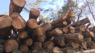 Вырубка Северного леса в Воронеже привела к уголовному делу