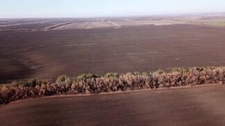 Катастрофический год. Воронежские аграрии испугались миллионных убытков из-за засухи
