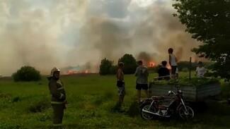 Мощный пожар случился на болотах у воронежского села: появилось видео