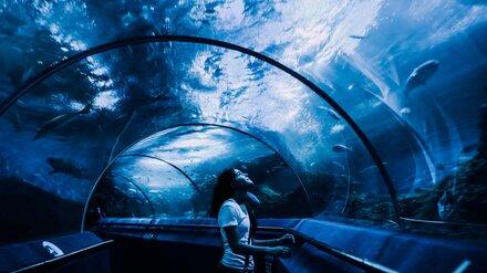 Увидеть акул и посетить корабль. Чем заняться воронежским школьникам на весенних каникулах