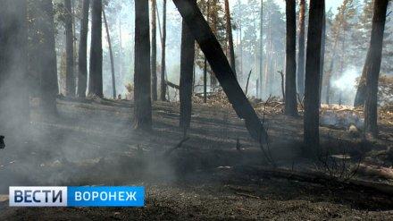 Спасатели объявили штормовое предупреждение в Воронежской области