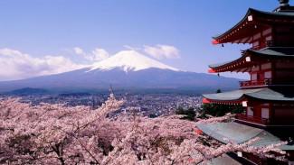 Воронежцев позвали на бесплатный фестиваль японского кино и чайные церемонии