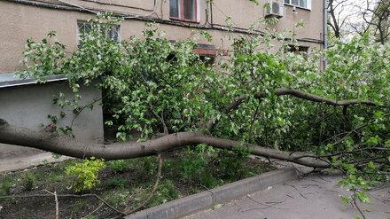 Воронежцы сообщили о 15 упавших из-за мощного ветра деревьях