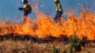 Несколько ландшафтных пожаров в Воронежской области было видно даже из космоса