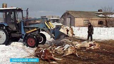Нарушения правил утилизации животных стали практикой в Павловском районе