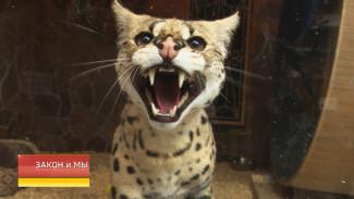 Городские дикари. Чем грозит нарушение закона «Об охране диких животных»