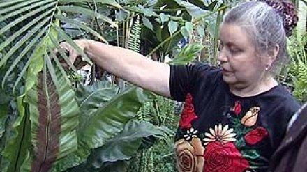 Грант в 4 миллиона рублей получат работники Ботанического сада ВГУ