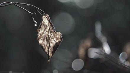 Пропавшую в октябре женщину из Воронежа нашли мёртвой