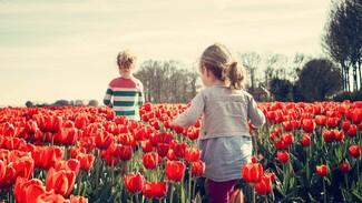 Россиянам напомнили график выходных на майские праздники