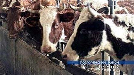"ООО ""Подгорноеинвест"" лишат коров"