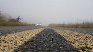 На трассе в Воронежской области ночью погибла неизвестная девушка