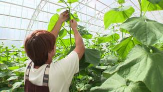 Осваивать органическое земледелие в Воронежской области доверят начинающим фермерам