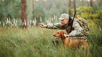 Где в Воронежской области на три года запретили охоту