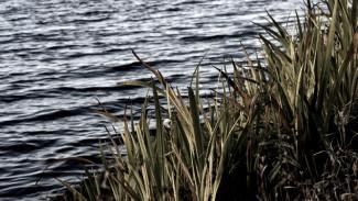 Пропавшую из дома престарелую женщину нашли мёртвой в Воронежском водохранилище