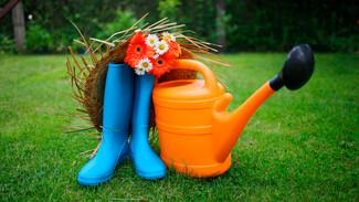 Воронежские депутаты приняли закон о региональной господдержке садоводов и огородников
