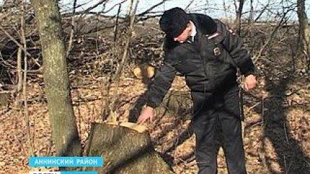 Житель села Никольское Аннинского района срубил восемь дубов