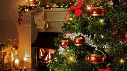 Россиянам рассказали, как выбрать хорошую новогоднюю ёлку и сохранить ей жизнь
