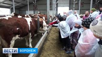 Воронежским школьникам показали, как на самой большой ферме в Европе производится молоко