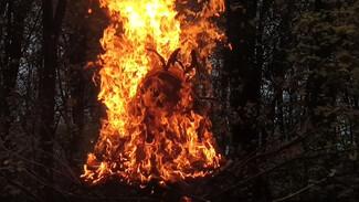 Появилось видео сожжения жуткой скульптуры коронавируса в Воронеже