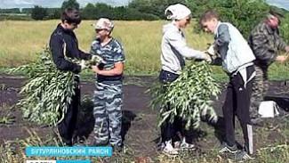 Бутурлиновцы вышли на заготовку кормов для диких животных
