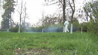 Жители Воронежской области пожаловались на нашествие мошки и комаров