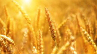 Инвестиции в воронежский агробизнес достигли 30 млрд рублей