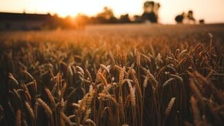 «Продимекс» продолжает переход на точное земледелие на воронежских полях