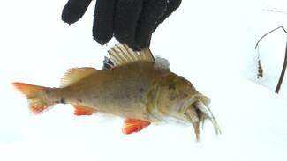Как в фильме-катастрофе. Экологи расследуют массовый замор рыбы в Воронежском заповеднике