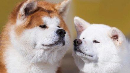 Аналитики назвали самые дорогие породы собак в Воронеже