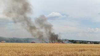 Воронежцы сообщили о вспыхнувшем рядом с домами поле