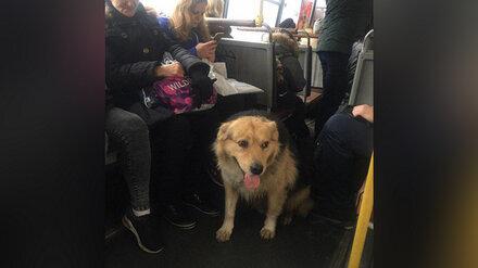 В Воронеже разыскивают собаку, которая сама уехала на автобусе
