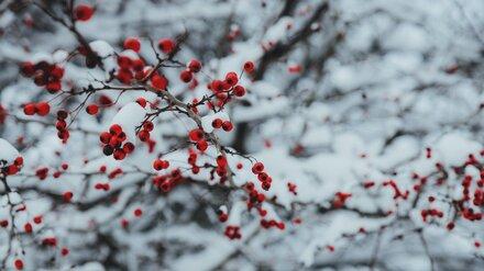 Жителям Воронежской области пообещали первый снег в конце недели