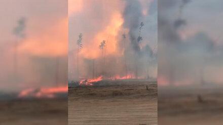 В Воронежской области вспыхнул третий за день крупный ландшафтный пожар