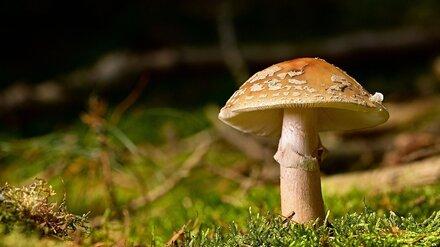 В Воронежской области 7 человек отравились грибами