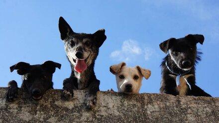 Воронежский губернатор поручил найти дворы, в которых больше всех бродячих собак