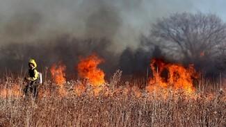 Взрывной рост пожарной опасности зафиксировали в Воронежской области