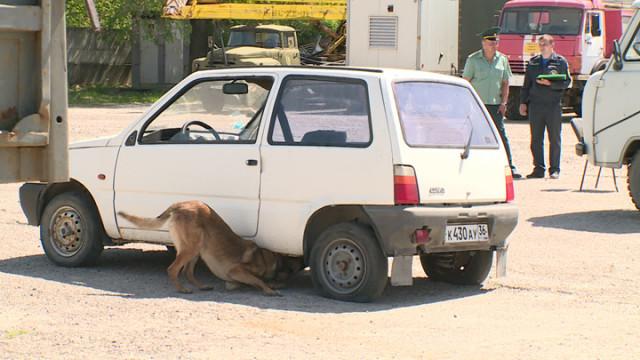 Найти за 5 минут. В Воронеже служебные собаки искали спрятанную в машинах взрывчатку