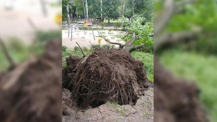 Огромный дуб рухнул на детскую площадку в Центральном парке Воронежа