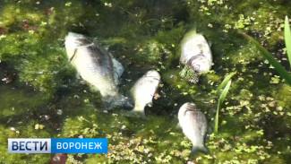 Экологи выясняют, кто виноват в массовом заморе рыбы в Аннинском районе