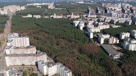 В воронежском Северном лесу срубили здоровые деревья