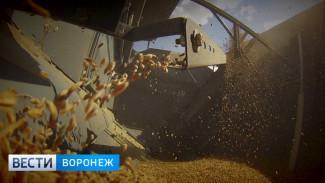 В 7 районах Воронежской области аграрии полностью завершили уборочную кампанию
