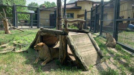 В Воронежском зоопарке ответили на критику посетителя о плохом состоянии животных