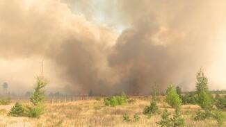 Площадь лесного пожара на Кожевенном кордоне выросла до 62 га