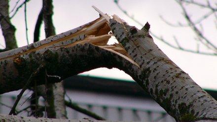 Упавшая с дерева ветка убила рабочего воронежского авиазавода