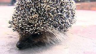Обитатели зоопарка не впадают в анабиоз из-за аномально жаркой осени