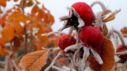 МЧС объявило штормовое предупреждение из-за заморозков в Воронежской области