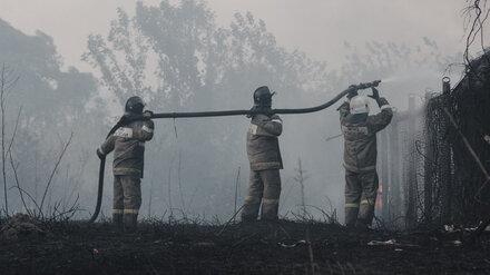 В Воронеже запахло гарью из-за разбушевавшихся лесных пожаров