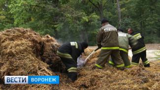 В Воронежском центральном парке вновь полыхало сено